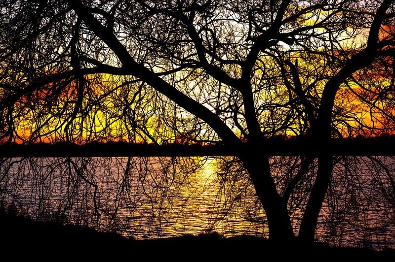 Tree silhouette at Craigavon Lakes