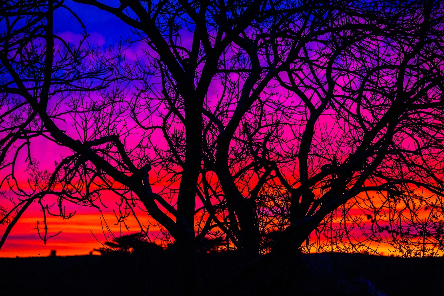 Silhouette of tree sunset at Maghera, Co.Down, N.Ireland