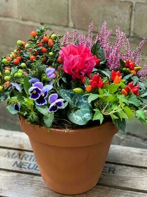 Terracotta planted arrangement