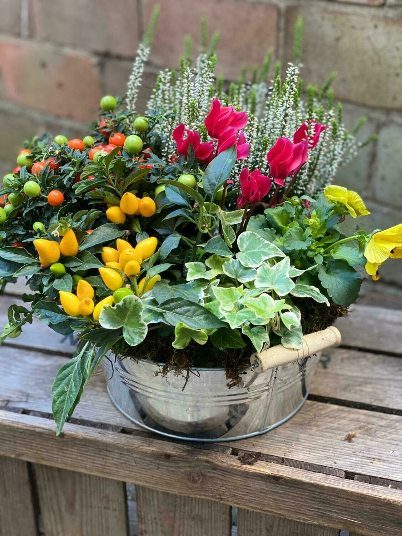 Seasonal planted arrangement
