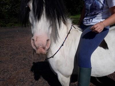 LUCKY Rhythm Beads for horses.