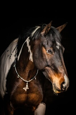 INDIE rhythm beads for horses, ponies and equines