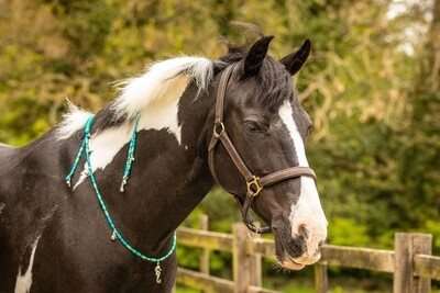 SHELDON rhythm beads for horses, ponies and equines
