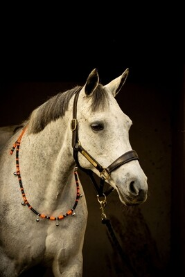NEON rhythm beads for horses, ponies & equines