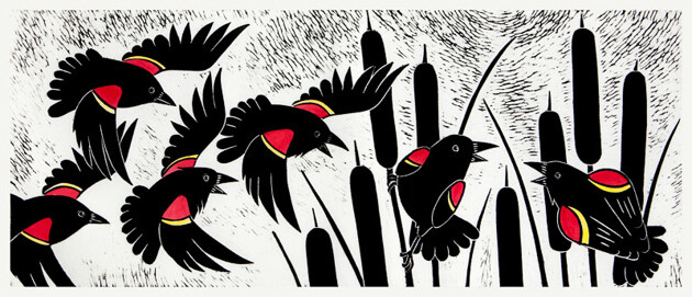 Raucous Red Winged Blackbirds