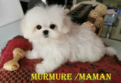 ❤️ Murmure & Marley attendent la cigogne.❤️ ***DÉPÔT*** (3 dépôts disponibles)