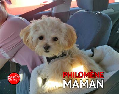❤️ Philomène & Marley sont en accouplement.❤️ ***DÉPÔT*** (2 dépôts disponibles)