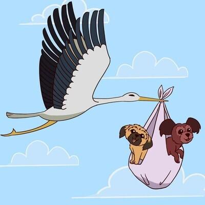 ❤️ Bigoudi & Marley, Maltipoo F2, attendent la cigogne.❤️ ***DÉPÔT*** (2 dépôts disponibles)