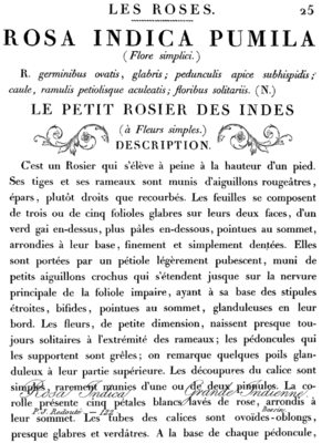 IOD LE PETIT ROSIER 11x14 DECOR TRANSFER