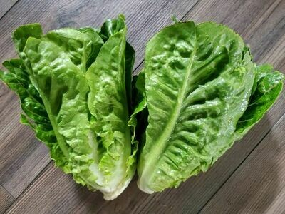 Baby romaine lettuce mix