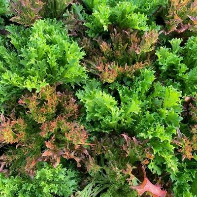 Sweet Crip Salad Mix