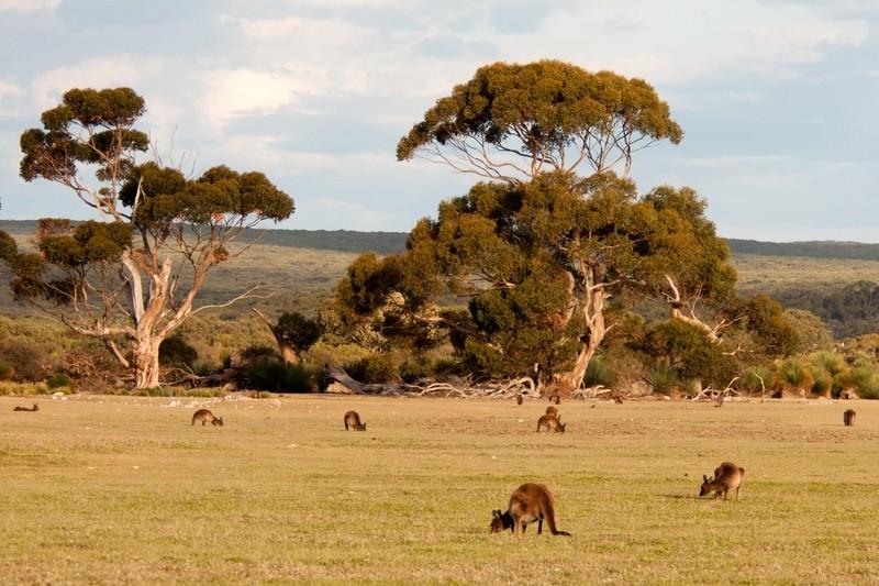 5D Adelaide & Kangaroo Island Experience