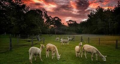 7D6N Perth & Farm Tour