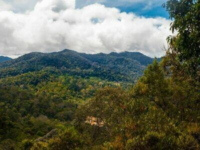 2D1N Nature Xcape Taman Negara