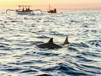 5D4N Bali Dolphin