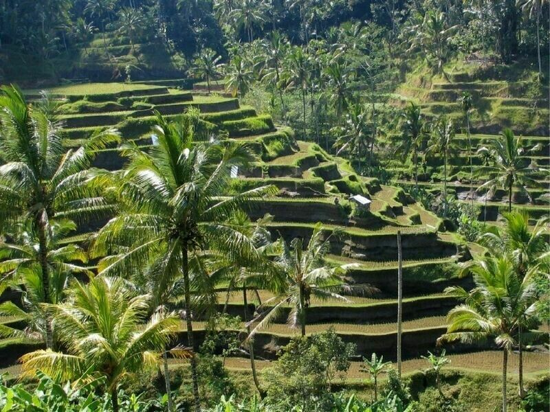 4D3N Bali Honeymoon