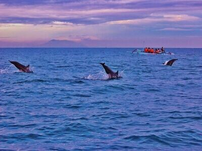 4D3N Bali Dolphin