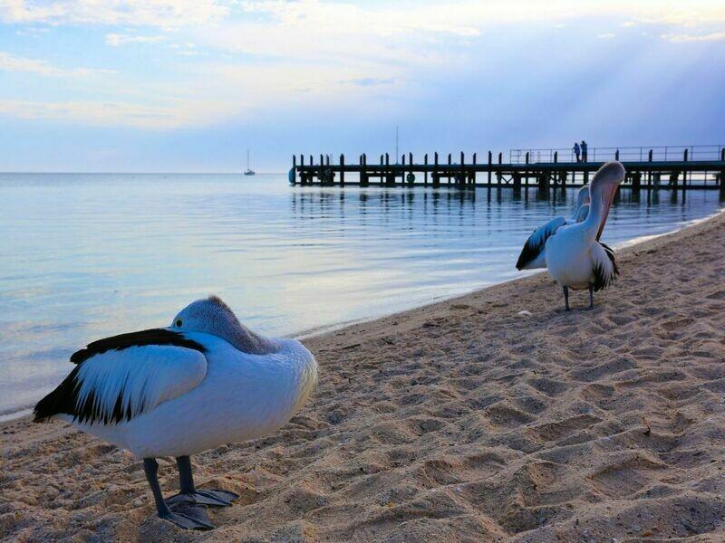 7D Perth Roadtrip To Monkey Mia & Coral Coast