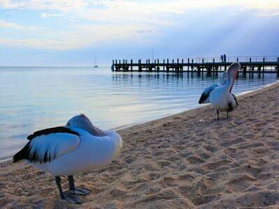 7D6N Perth Roadtrip To Monkey Mia & Coral Coast