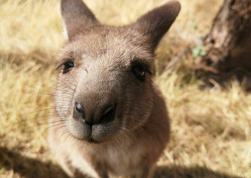 1 Day Kangaroo Island Tour With Cruise