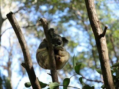 1 Day Currumbin Wildlife Sanctuary Day Pass (Free Koala Photo)