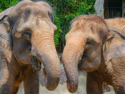Wildlife Reserves Singapore Admission Ticket