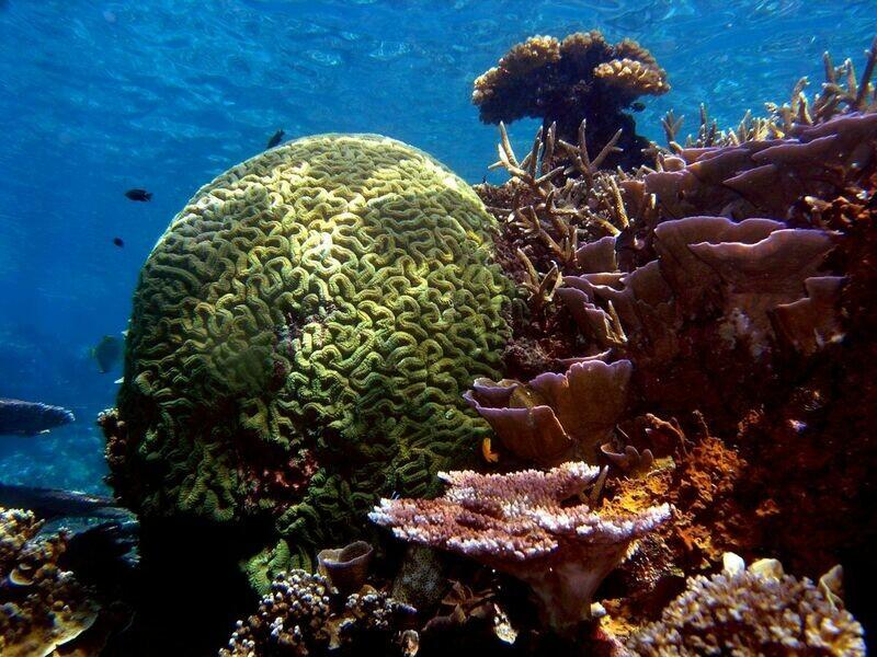 3D2N Laguna Redang Island Resort (Diving)