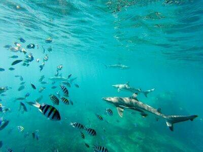 3D2N Perhentian Coral View Island Resort