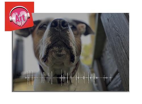 Pet Photo & Soundwave - Aluminum