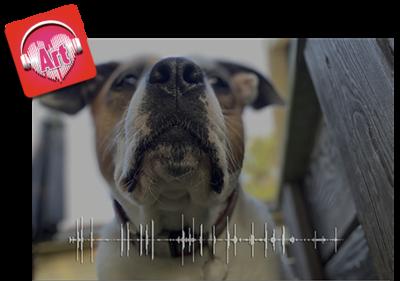 Pet Photo & Soundwave - Print