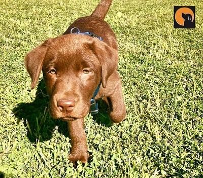 Puppy School: Lezione Singola
