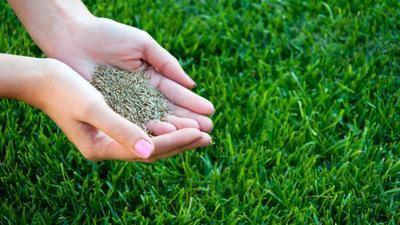 Grass Starter Fertilizer