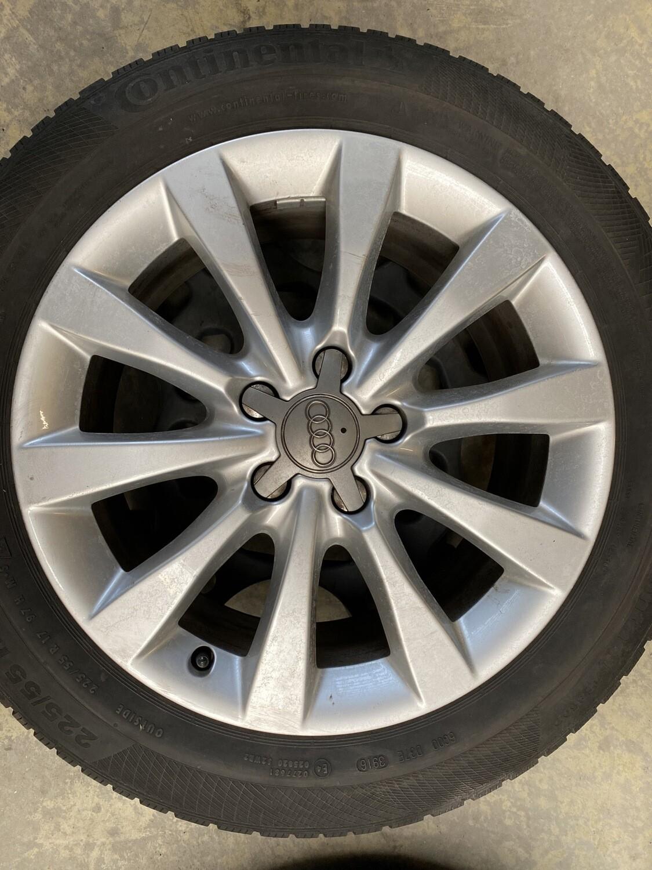 Audi (små kantkys)