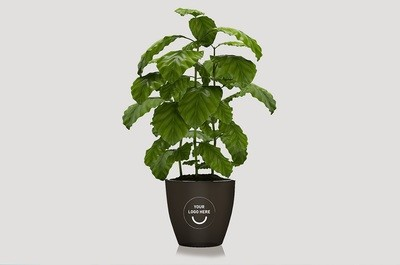 Kaffee-Blumentopf