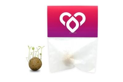 Seedbomb Bienenfreund (1 Stück)