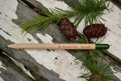 Sprout Bleistift Fichte (1 Stück)