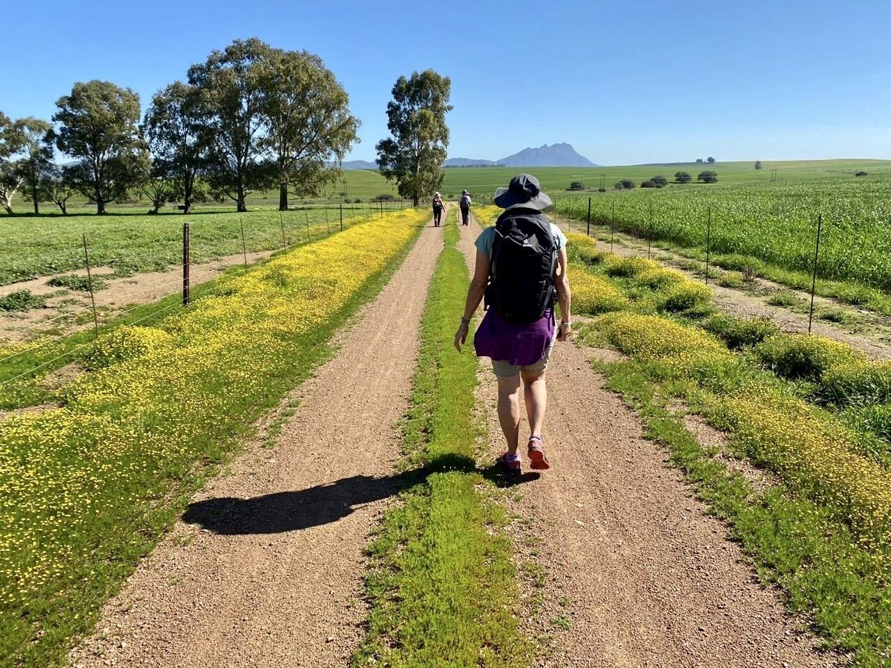 7 day Camino