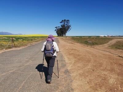 25 Day Camino