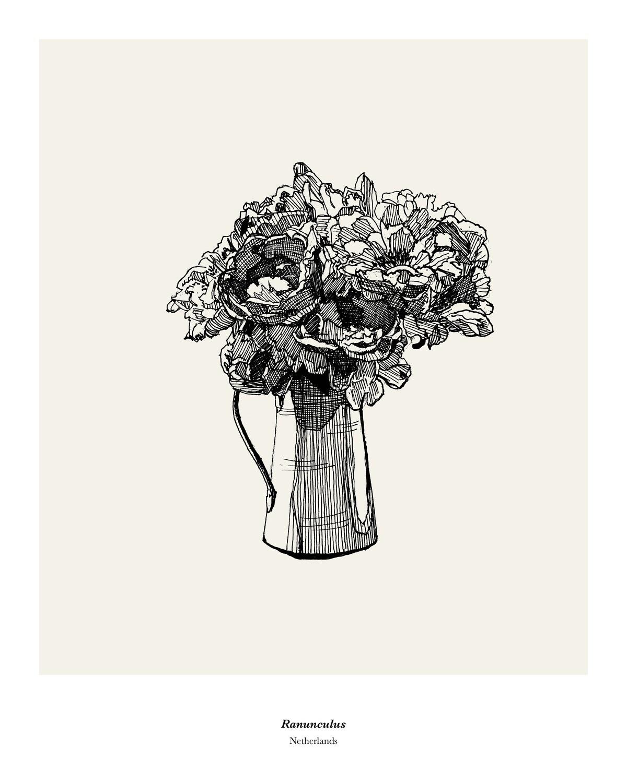 Ranunculus (Limited Edition)