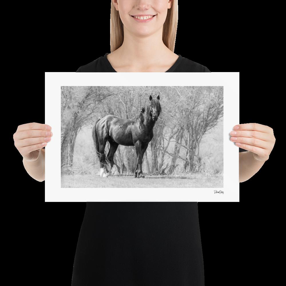 "Fine Art Print: Wild Horses - ""The King"""
