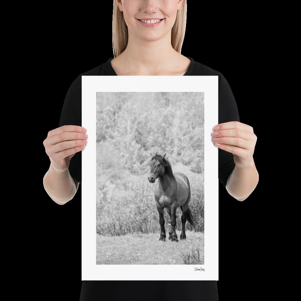 """Fine Art Print: Wild Horses - """"Assessment"""""""