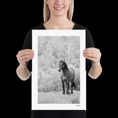 Fine Art Print: Wild Horses -