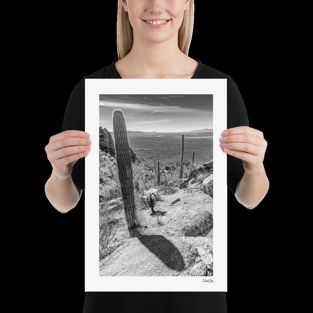 "Fine Art Print: ""Saguaro Shadows"""