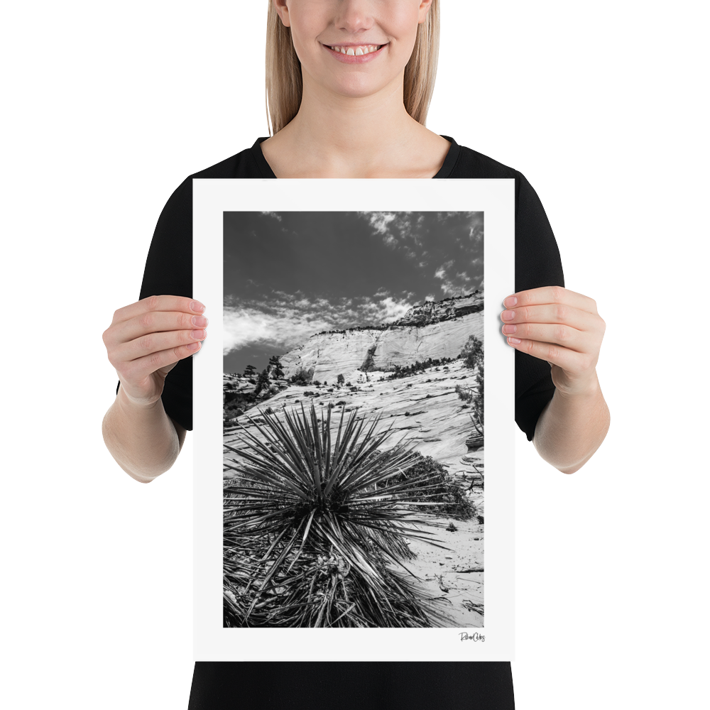 "Fine Art Print: ""Morning Yucca"""