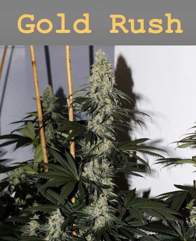 Mountain Organics Gold Rush