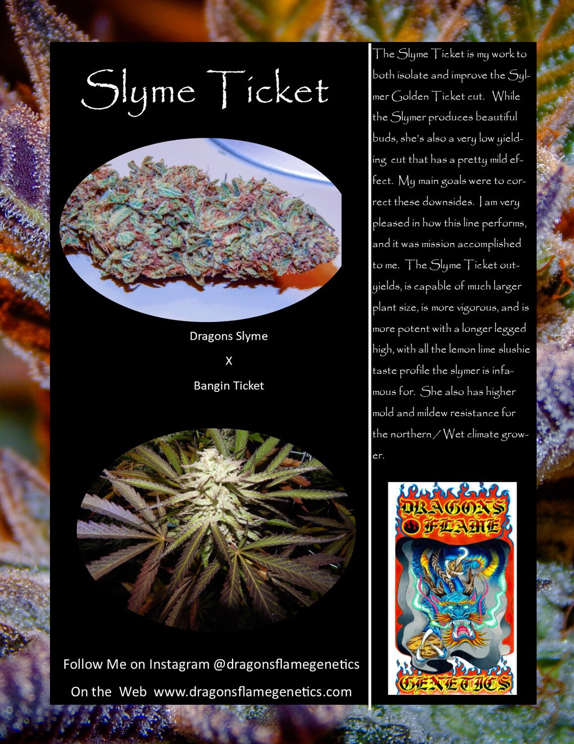 Dragons Flame Genetics Slyme Ticket