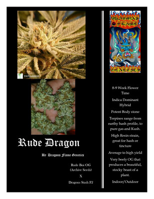Dragons Flame Genetics Rude Dragon