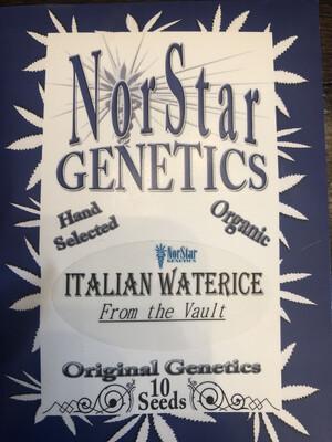NorStar Genetics Italian Water Ice