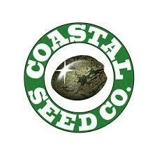 Coastal Seed Co Burmese IBL
