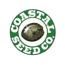 Coastal Seed Co Burmese IBL